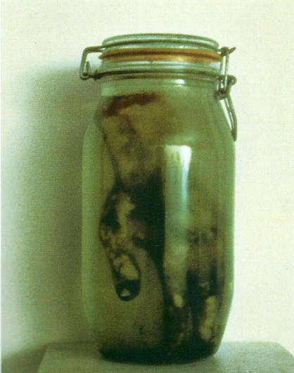 Kiki Smith: Hand in Jar, 1983
