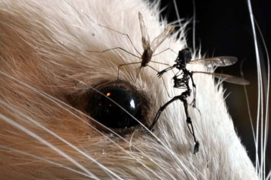 Tessa Farmer, The White Lie (detail), rat, mosquitoes, plant roots, insects, 2011