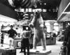 Polar Bear (Ursus maritimus), Los Angeles County Museum, Los Angeles