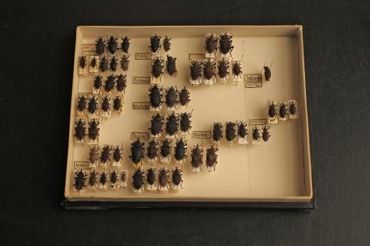 Cabinet6Shelf1Box5