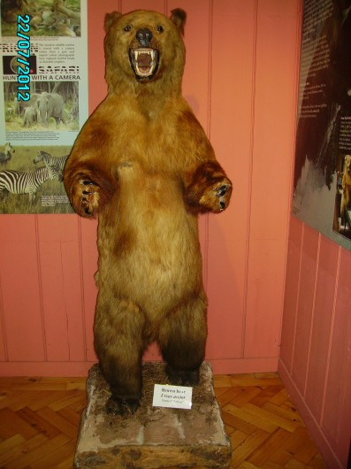 Arthur, the Siberian Brown Bear, Haslemere Educational Museum, Surrey, early 20th century