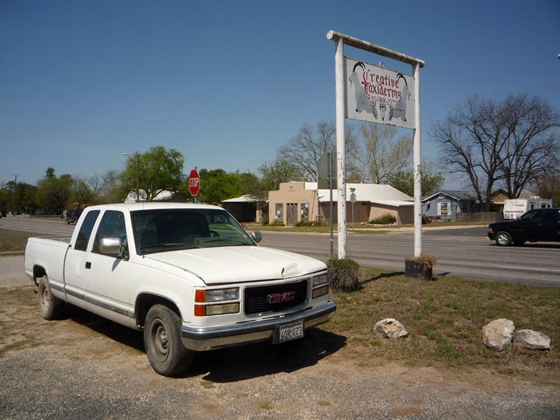 Texas Taxidermy